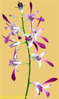 Орхидеи для НЕботаников